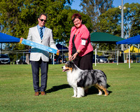 2016-07-24: Ladies Kennel Assoc Qld
