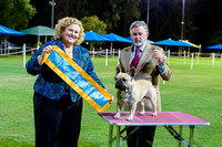 2016-07-23: Ladies Kennel Assoc Qld