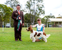 2016-09-17: Sporting Spaniel Club of Qld