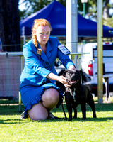2015-06-21 Amenities Committee of Dogs Qld